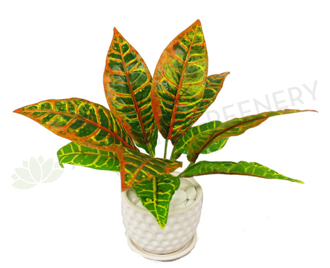 SP0229 Red Croton / Red Mammy  30cm