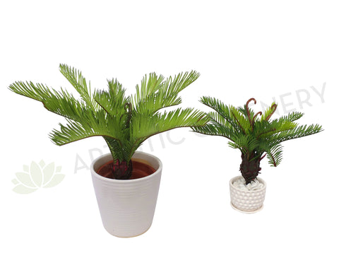 SP0230 Small Cycad Plant Real Touch 2 Sizes