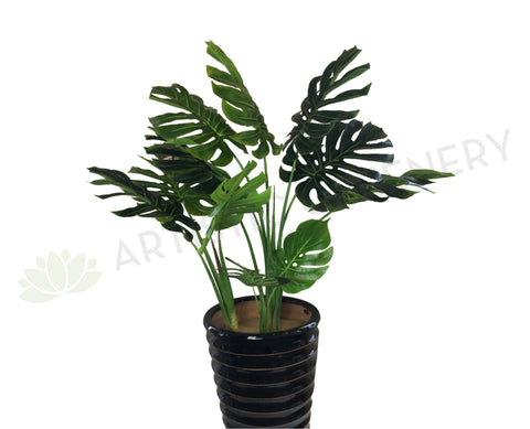 SP0265 Monstera / Swiss Cheese / Split Philo Plant 114cm