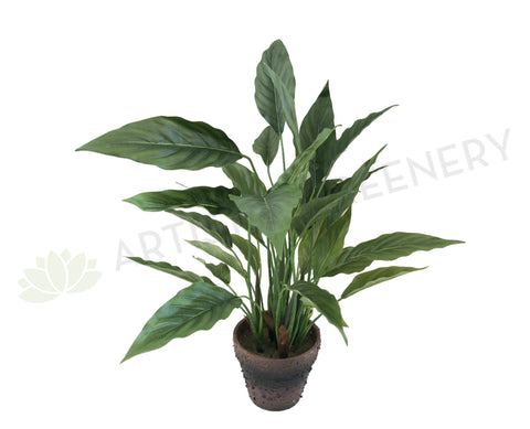 SP0275 Spathiphyllum / Peace Lily 53cm
