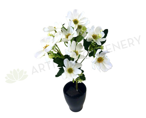 SP0295 Cosmos Bunch 33cm White