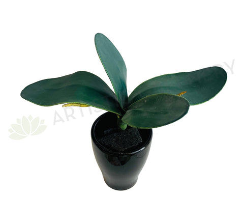 SP0323 Phalaenopsis Orchid Leaves 21cm CLEARANCE