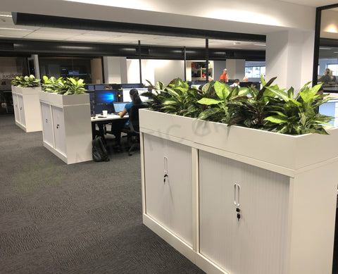SAGE WA - Office Silk Dieff Plants for Tambour Units