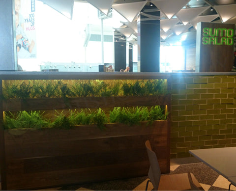 Sumo Salad - Display - Artificial Greenery and Herbs