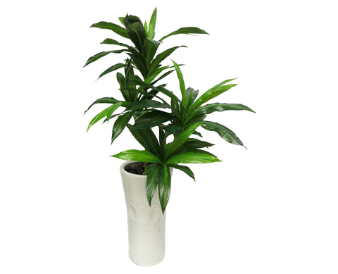 T0003 Dracena (set of 2 stems) Real Touch Leaves 100cm