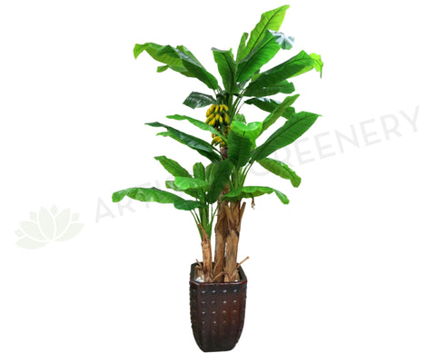 T0026 Banana Tree (with Bananas) 200cm
