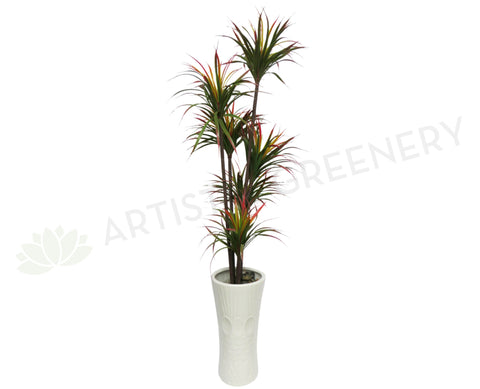 T0038 (SALE ITEM) Dracena Marginata Green with Red 125cm