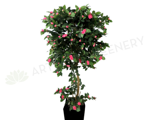 T0044PIN Camellia Tree with Pink Flowers