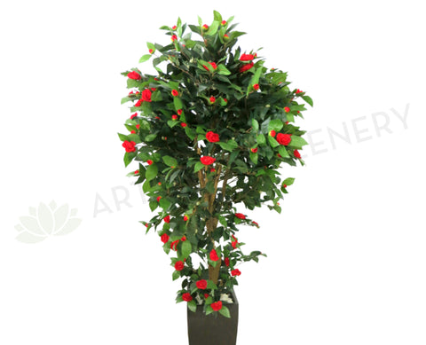 T0044RED Camellia Tree with Red Flowers