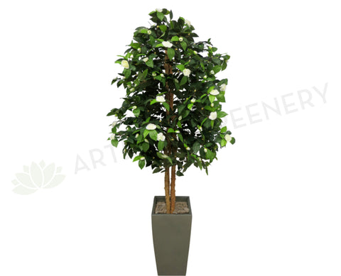 T0044WHI Camellia Tree with White Flowers