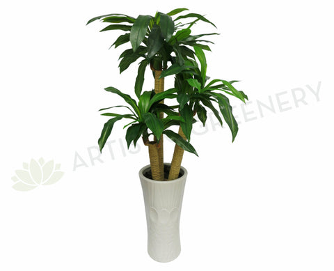 T0054 Dracena Fragrans (set of 3) 120-90-50cm