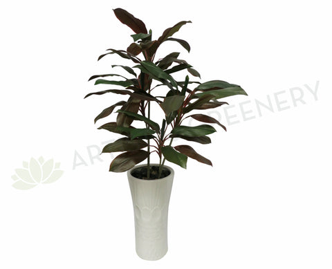 T0069 Cordyline Rumba (set of 2) 130cm