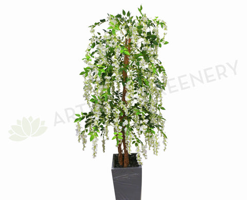 T0070 Wisteria Tree with White Flowers 170cm