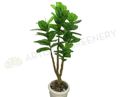 T0087 Rubber Tree