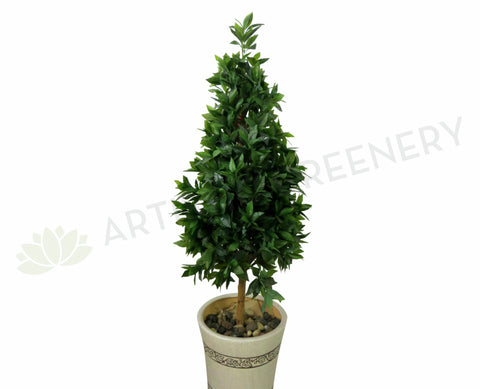 T0095 Laurus Nobilis (Bay Tree) Cone Shaped 140cm