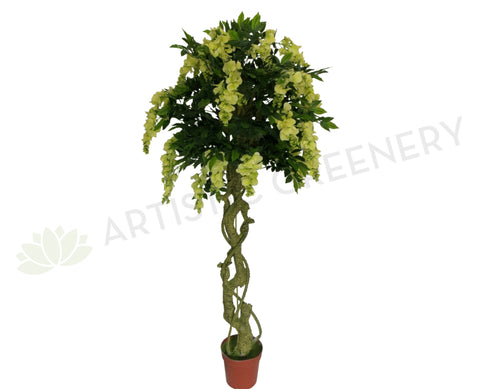 T0098 Wisteria Tree 180cm Ligth Green
