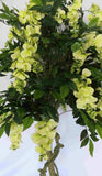 T0098 Wisteria Tree with Light Green Flowers 180cm