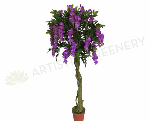 T0098 Wisteria Tree with Purple Flowers 180cm