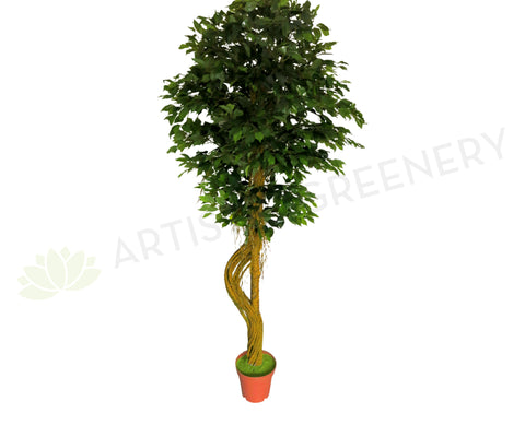 "T0099 Ficus Tree ""S"" Trunk, Hanging Roots & Real Touch Leaves 210cm"