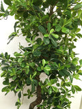 T0112 Schefflera (Bonsai Style) Real Touch Leaves 165cm
