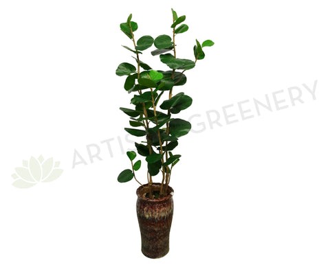 T0113 Fiddle Fig Tree Real Touch Leaves 160cm