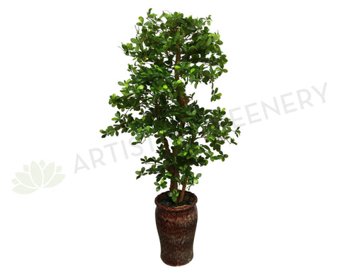 T0114 Schefflera (Bonsai Style) Real Wood Trunk & Real Touch Leaves 165cm