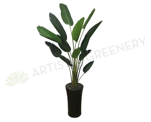 Ideal T0119 Giant Bird of Paradise Plant / Strelitzia Nicolai 210cm  JC69