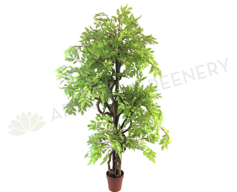 T0133 Ficus Tree (Light Green Leaves) 145cm Real Tree Trunk