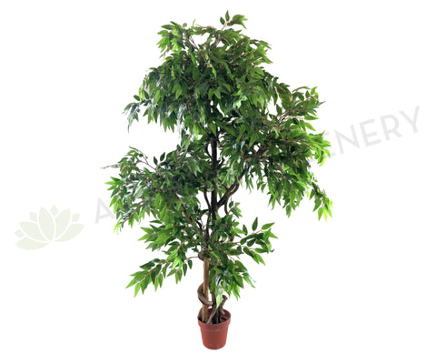 T0136 Ficus 3 Tiers 160cm Real Tree Trunk