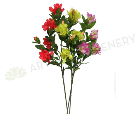 Clearance Stock - Rhodedendron 105cm