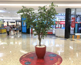 Faux Ficus Tree / Canopy Tree 270cm Purchase or Hire