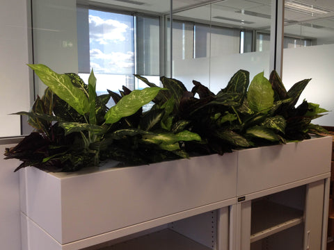 Iluka - Artificial Plants for Filing Cabinets Office ...