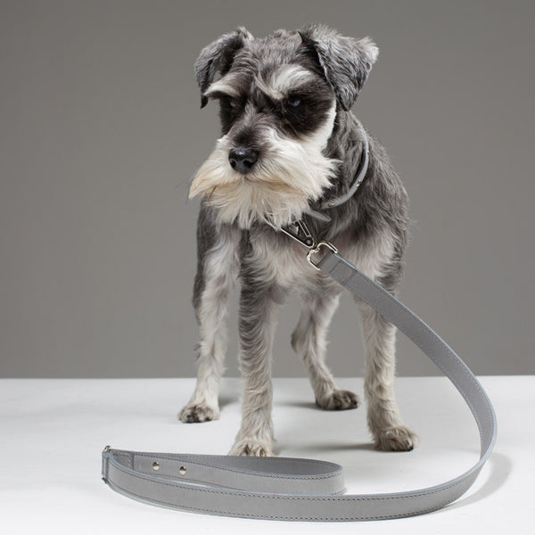 Gloria Dog Collar - Soft Grey Extra Small 22-28cm