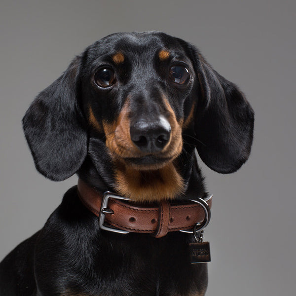 Maison Le Lou Luxury Leather dog collar Dachshund
