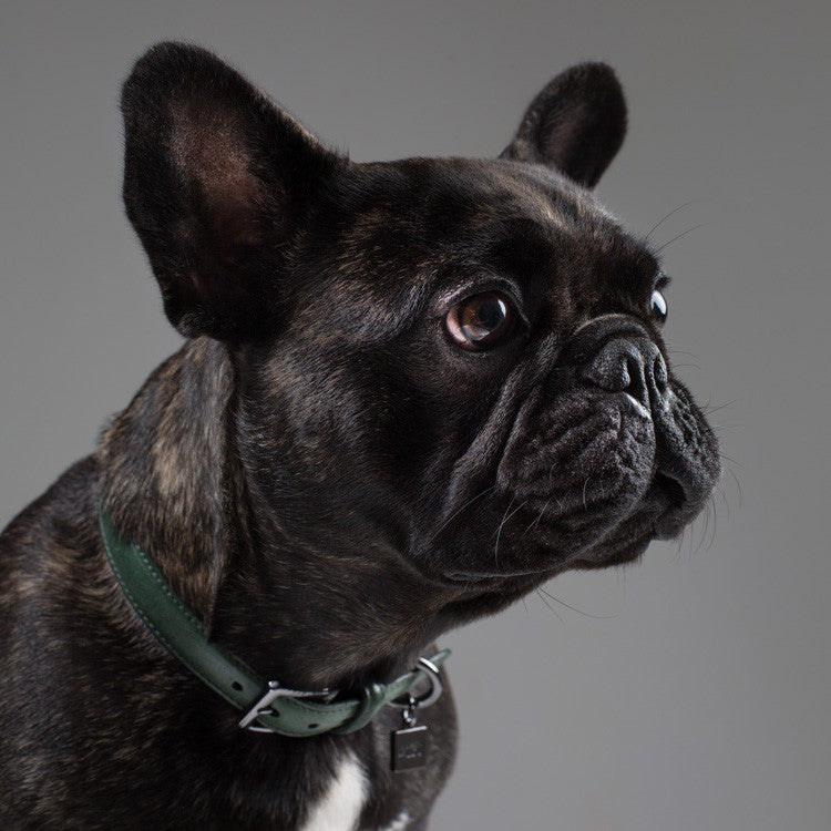 Maison Le Lou Luxury Leather dog collar French Bulldog