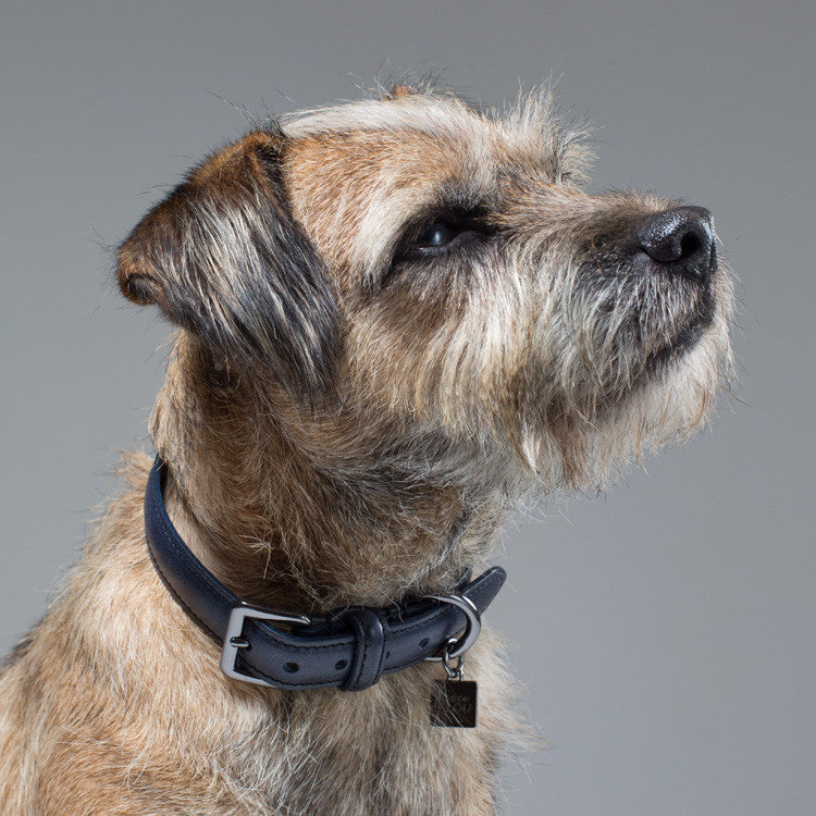 Gregory Dog Collar - Navy