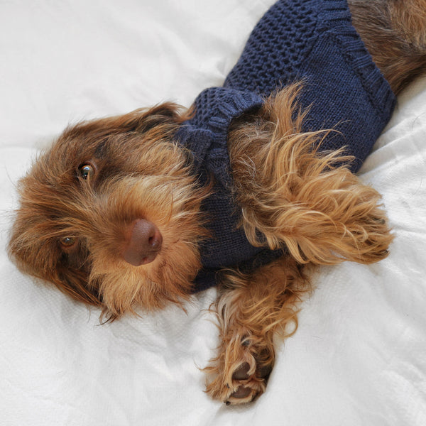 Moritz Dog Sweater & Sleepy Snack bundle  - In your choice of colour