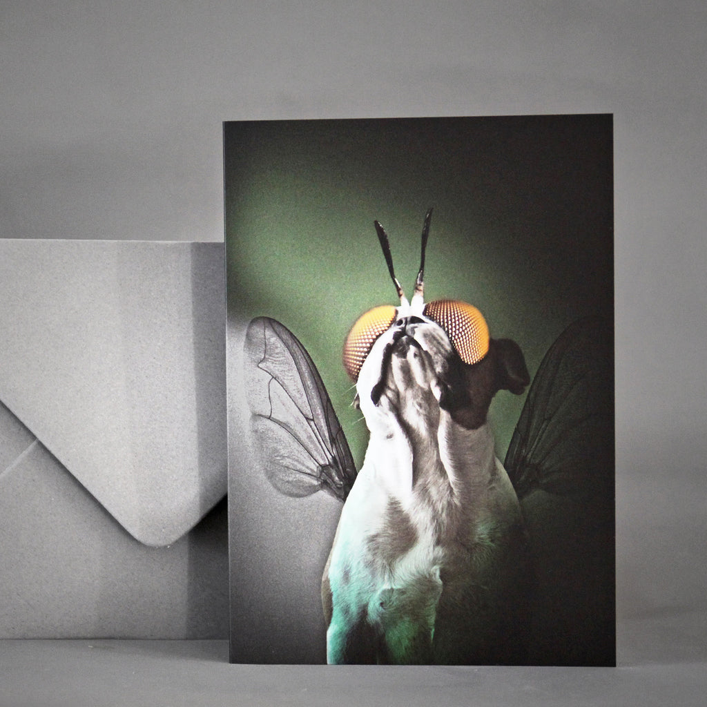 Brixton The Frenchie A6 Card - The Fly