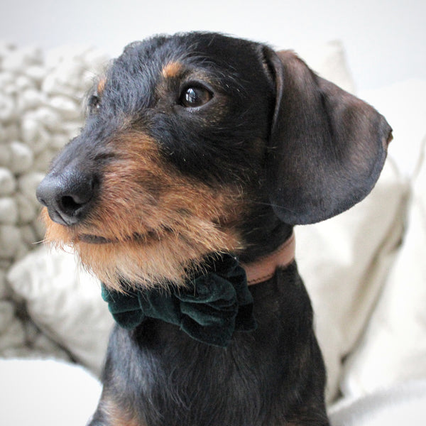 Louis Bow Tie - Emerald