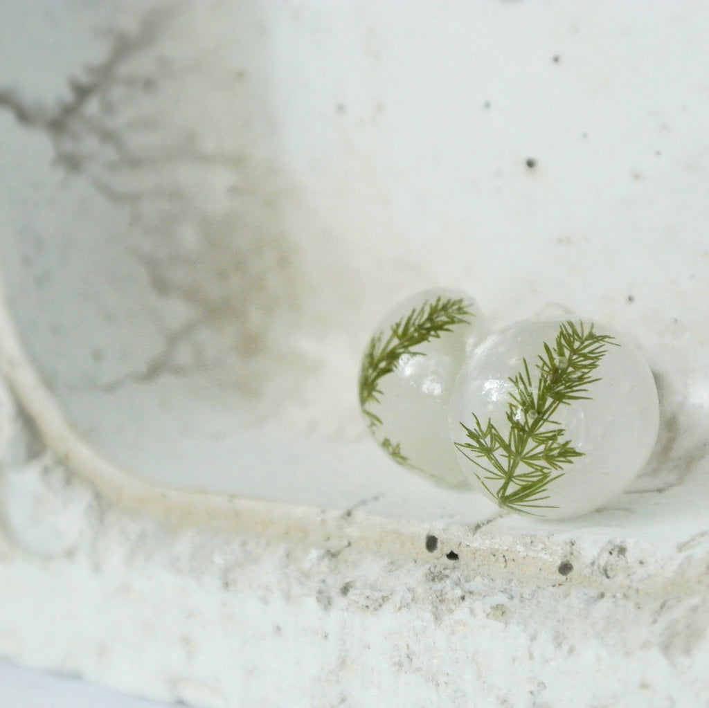 Fern in Resin