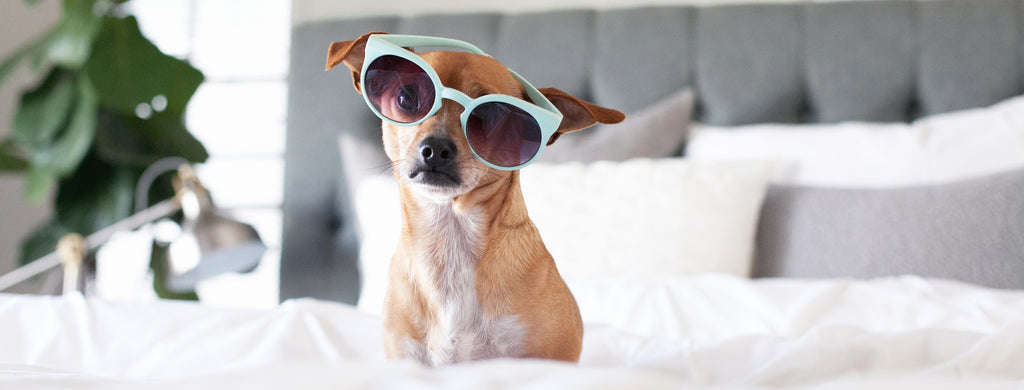 Puppy with Sunglasses on a CRaVE Mattress
