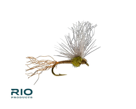BWO Sparkle Flag Emerger - Half Dozen