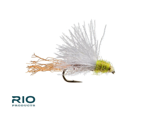 CDC BWO Emerger - Half Dozen