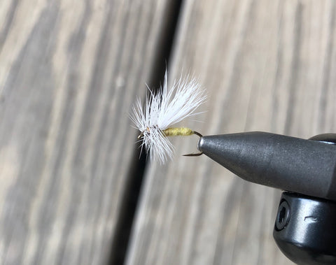 Apple Caddis