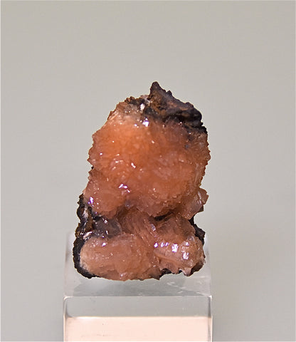 Poldervaartite with Bolfontenite, N'chwaning Mine, Kalahari Manganese Fields, South Africa, Mined ca. 2009, Kalaskie Collection #665, Miniature 2.0 x 2.5 x 3.5 cm, $350. Online 3/29.