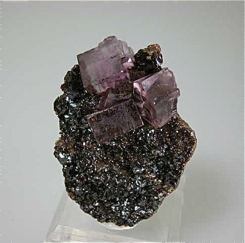 Fluorite on Sphalerite, Hardin County, Southern Illinois attr: Hill-Ledford Mine, Ozark-Mahoning Company, Cave-in-Rock District Miniature 2.5 x 4 x 5 cm $150. Online 9/30 SOLD