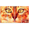 Cat Stare Canvas Wall Art Print