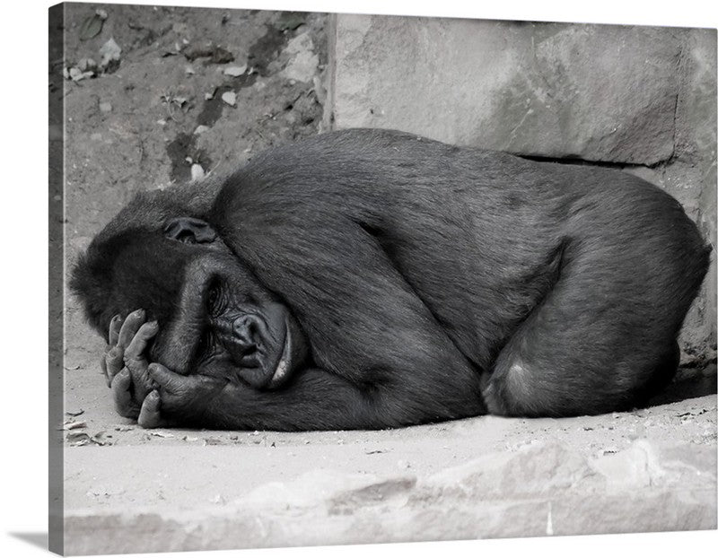 Deep Thought Ape Canvas Wall Art Print