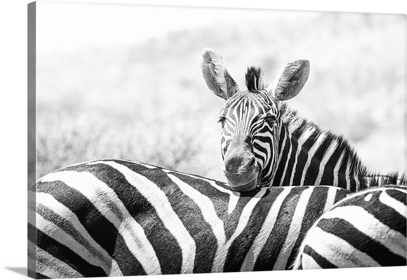 Peek a Boo Zebra Canvas Wall Art Print