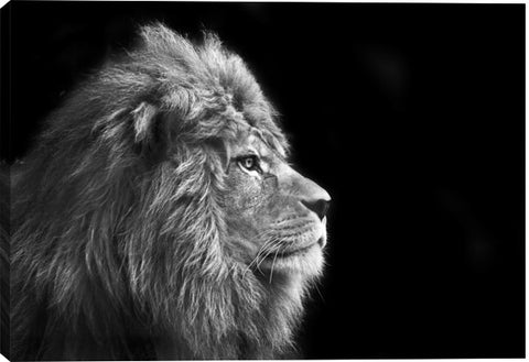 Portrait Of Male Lion Animal Canvas Wall Art Print by Unknown